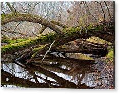 Mossy Tree Acrylic Print by Ms Judi