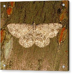 Acrylic Print featuring the photograph Moth by Bruce Carpenter