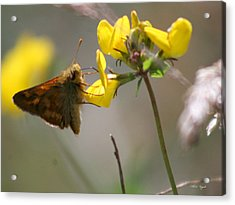 Moth Life Acrylic Print