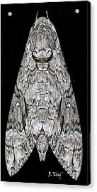 Acrylic Print featuring the photograph Moth by Roena King