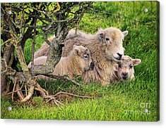 Mother And Babies Acrylic Print by Jason Connolly