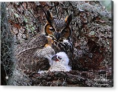 Mother And Baby Owl Acrylic Print by Barbara Bowen