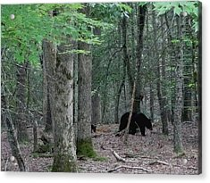 Mother Bear And Cub In Woods Acrylic Print by Kathy Long