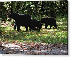 Mother Bear And Three Cubs Acrylic Print by Kathy Long