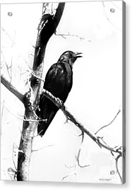 Mother Crow Acrylic Print