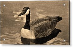 Mother Goose Acrylic Print by Sergio Aguayo