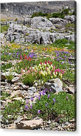 Acrylic Print featuring the photograph Mother Nature's Master Garden 4 by Katie LaSalle-Lowery