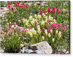 Acrylic Print featuring the photograph Mother Nature's Master Garden by Katie LaSalle-Lowery