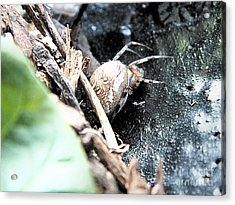 Mother Spider Acrylic Print