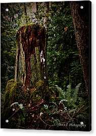 Mother Stump Acrylic Print by Dorothy Hilde