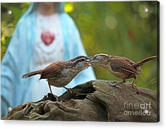 Acrylic Print featuring the photograph Mother Wren Feeding Juvenile Wren by Luana K Perez