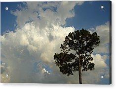 Mottled Clouds And Scrub Pine Acrylic Print by Debbie Wassmann