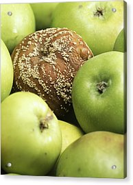 Mouldy Apple Acrylic Print by Sheila Terry