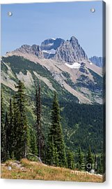 Acrylic Print featuring the photograph Mount Gould And Subalpine Fir by Katie LaSalle-Lowery