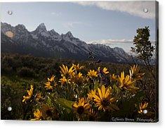 Mountain Flowers Acrylic Print by Charles Warren
