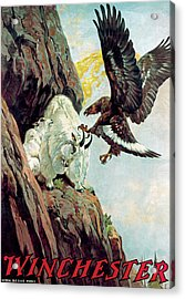 Mountain Goat And Eagle Acrylic Print by Lynn Bogue Hunt
