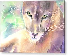 Mountain Lion Acrylic Print by Arline Wagner