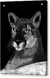 Acrylic Print featuring the mixed media Mountain Lion by Kume Bryant