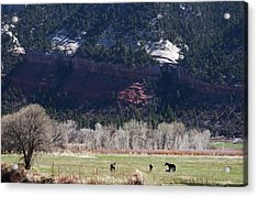Acrylic Print featuring the photograph Mountain Pasture by Lorraine Devon Wilke
