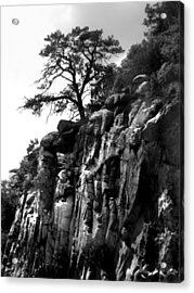 Mountain Tree Acrylic Print