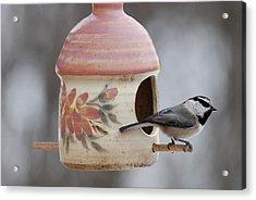 Mountian Chickadee At Feeder Acrylic Print