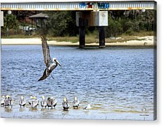 Move Over Acrylic Print by Deborah Hughes
