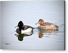 Mr And Mrs Ring-neck Acrylic Print