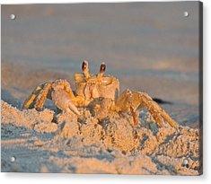 Mr. Crabby Acrylic Print by Eve Spring