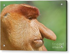 Mr Grump  Acrylic Print by Gary Bridger