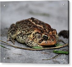 Mr Toad Acrylic Print