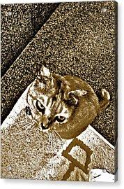 Ms Gato In Sepia Acrylic Print by Kornrawiee Miu Miu
