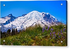 Mt Rainier Meadow With Lupine Acrylic Print by David Patterson