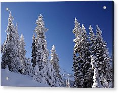 Mt. Rainier's Christmas Tree's Acrylic Print