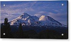Mt Shasta Acrylic Print by Albert Seger