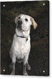 Mucky Pup Acrylic Print
