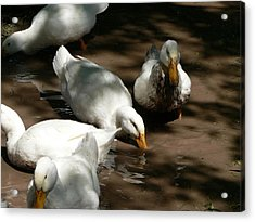 Acrylic Print featuring the photograph Muddy Ducks by Laurel Best