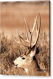 Mule Deer Acrylic Print by Earl Nelson