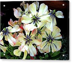 Multicolored Beauties Acrylic Print by Ed Golden