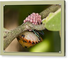 Acrylic Print featuring the digital art Mum To Be Two 01 by Kevin Chippindall