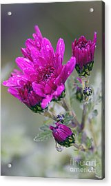 Mum With Raindrops Acrylic Print by Sharon Talson