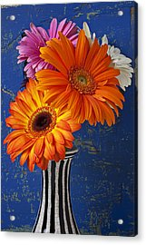 Mums In Striped Vase Acrylic Print by Garry Gay