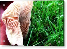 Acrylic Print featuring the photograph Mushroom And Dewdrops by Katie Wing Vigil