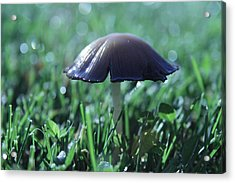 Mushroom In Morning Light Acrylic Print