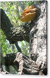 Mushroom Man Acrylic Print by Juliana  Blessington