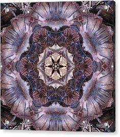 Mushroom With Star Center Acrylic Print