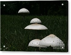 Mushrooms On The March Acrylic Print