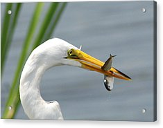 Acrylic Print featuring the photograph My Catch by Kathy Gibbons