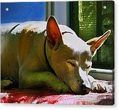My Dog Mike Acrylic Print by Debra Collins