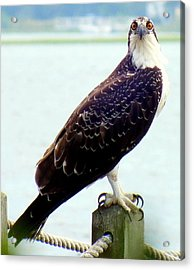 My Feathered Friend Acrylic Print by Karen Wiles