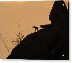 My Friend At Sunset I Acrylic Print by Carolina Liechtenstein